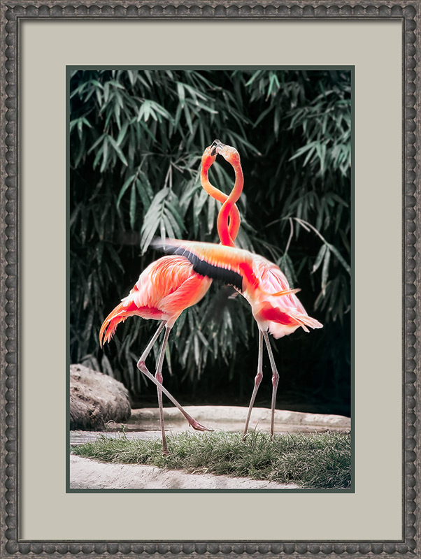 flamingoes after